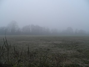 domnebbia