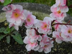 fiorimerc