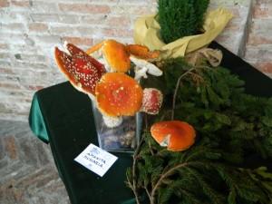 funghi1